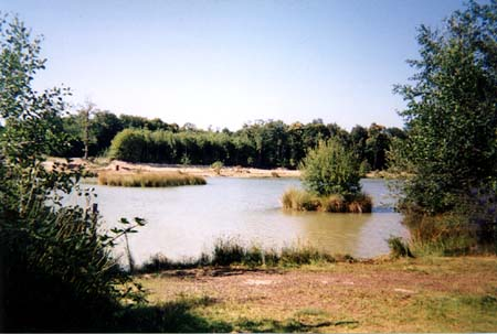 forty acre plantation lake vew